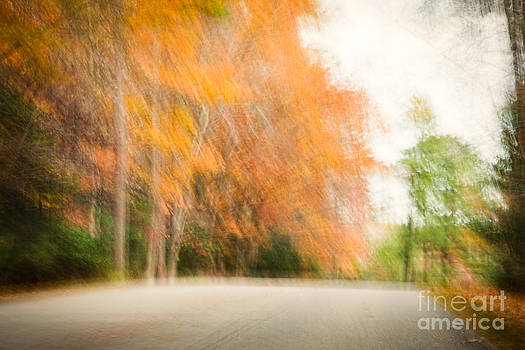 Lisa McStamp - Autumn by the Roadside