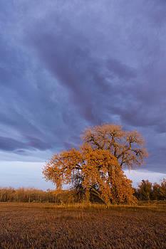 Tim Grams - Autumn Clouds