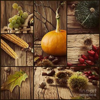 Mythja  Photography - Autumn collage