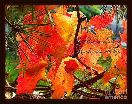 Autumn Colors by Heidi Manly