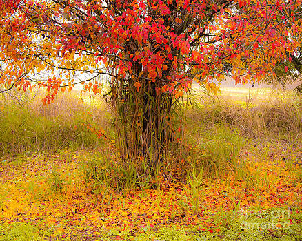 Autumn Colors by Jacki Soikis