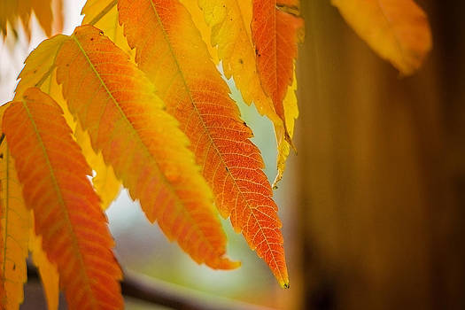 Autumn Colors by Linda Storm