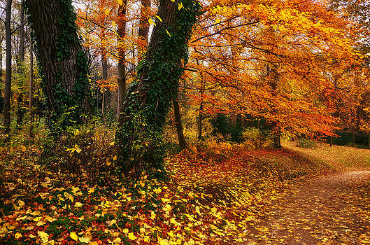 Autumn colors by Oleksandr Maistrenko