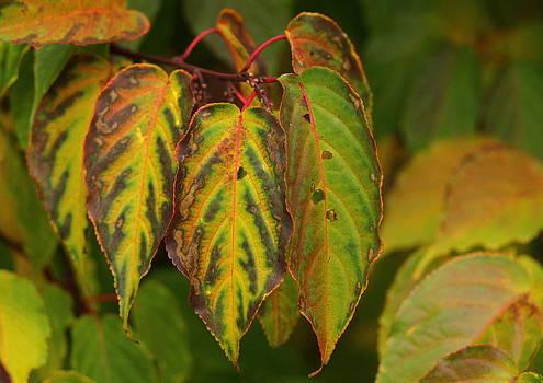 Autumn colours by Jacqui Collett