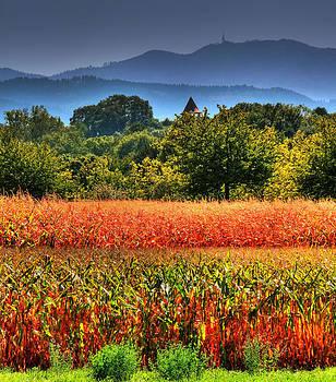Autumn Colours by Michael Lobisch-Delija