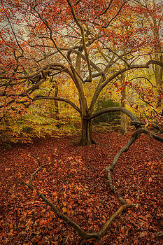 Autumn Colours by Stuart Gennery