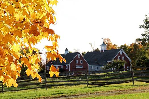 Autumn Comes to Hollis by Charlene Reinauer