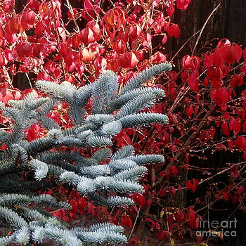 Autumn Contrast by Elaine Jones