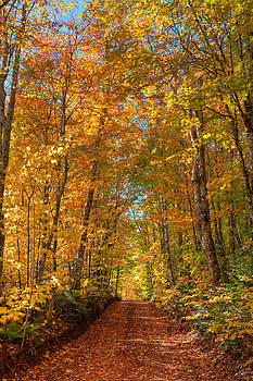 Matt Dobson - Autumn Country Road