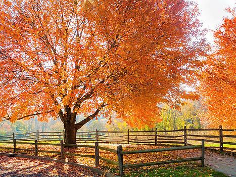 Autumn Dream by Andrew Kazmierski