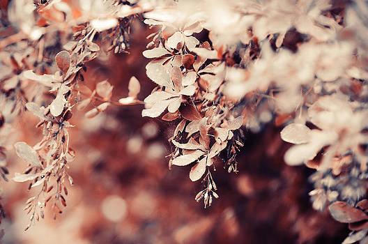 Jenny Rainbow - Autumn Dream