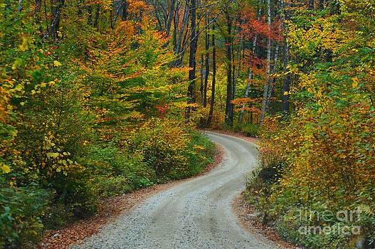 Autumn Drive by Sharon L Stacy