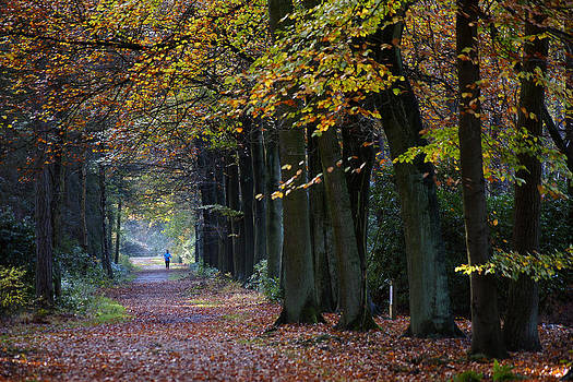 Autumn drove with runner by Erik Tanghe