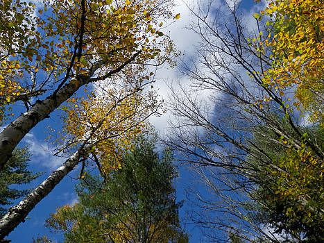 Autumn Embrace by Pema Hou