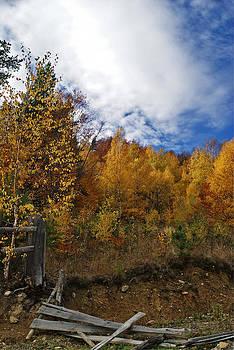 Bogdan M Nicolae - Autumn Fence