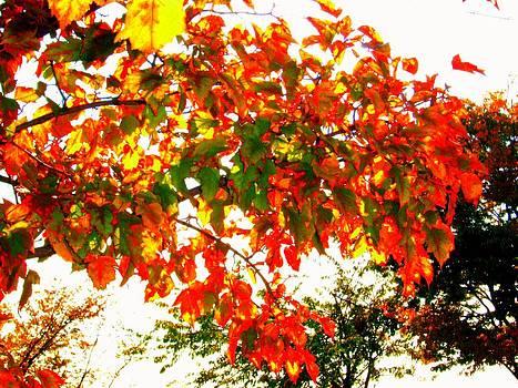 'Autumn Fire'  by Liza Dey