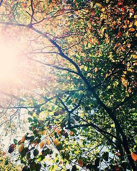 Autumn Flame by Kim Fearheiley