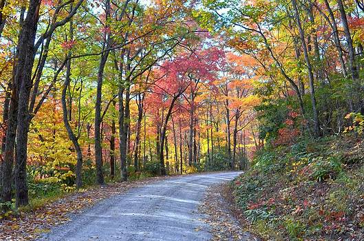 Autumn Forest Trail by Bob Jackson
