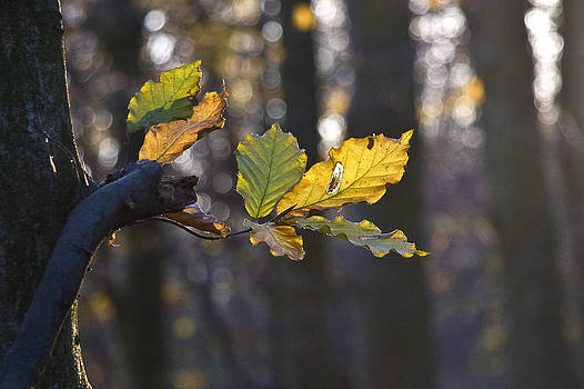 Autumn by Frits Selier