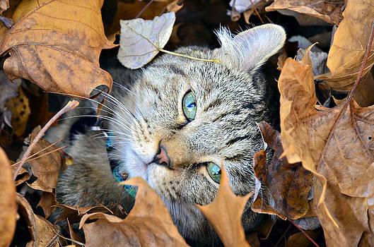 Autumn Fun by Susan Leggett