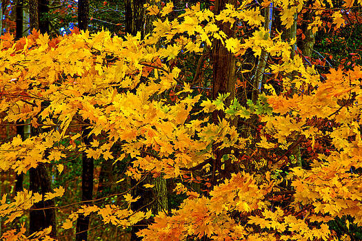 Autumn Glory by Andy Lawless