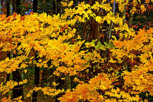 Autumn Glory dry brush by Andy Lawless
