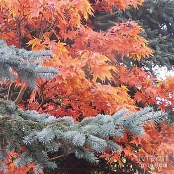 Autumn Glory by Elaine Jones