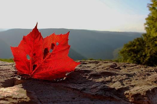 Autumn Glow by Stan Wikle