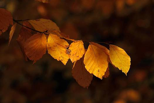 Autumn Gold by Peter Skelton