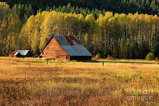 Autumn Gold by Winston Rockwell