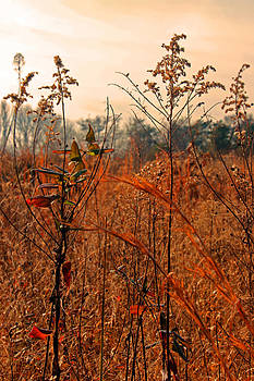 Carolyn Stagger Cokley - autumn grass 6275