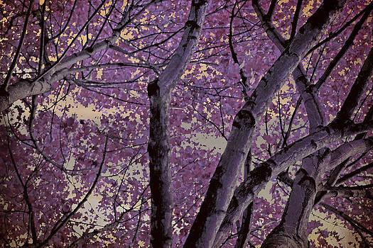 Autumn II by Nadeesha Jayamanne