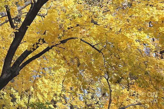 Chuck Kuhn - Autumn III