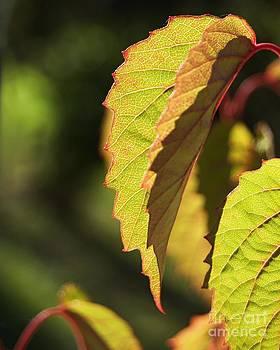 Autumn Impressions 7 by Katerina Vodrazkova