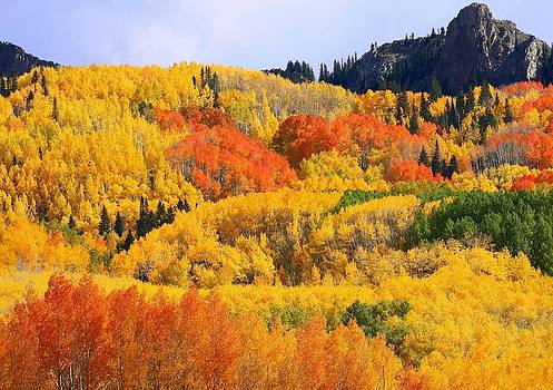 Autumn in full display at Kebler Pass by Jetson Nguyen