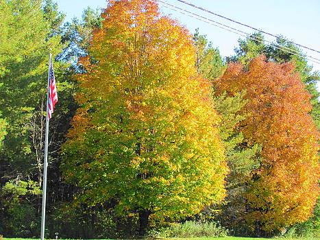 Autumn in Maine by Sandra Martin