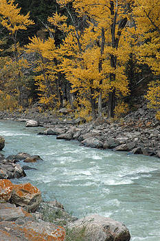 Autumn in Montana's Gallatin Canyon by Bruce Gourley