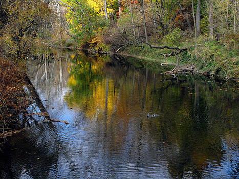 Autumn in NE Philadelphia by Dorin Adrian Berbier