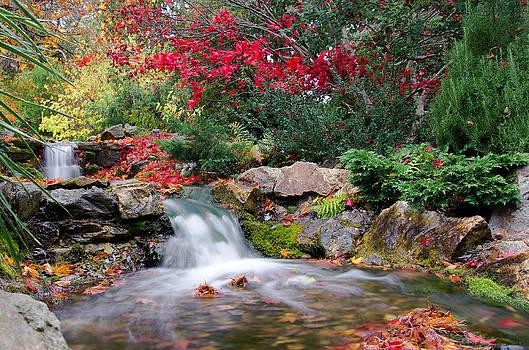 Martina Fagan - Autumn in the Botanic Gardens
