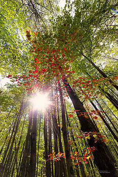 Autumn Invasion by Dustin Abbott