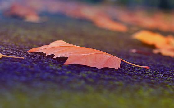 Autumn leaf II by Nadeesha Jayamanne