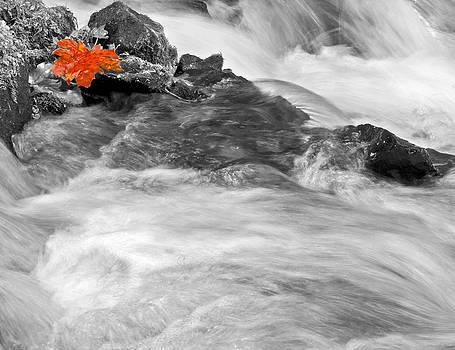 Autumn Leaf by Judi Baker