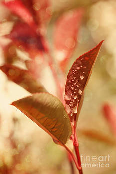 LHJB Photography - autumn leaf with water drops