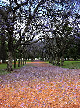Autumn Leaves by Gonzalo Teran