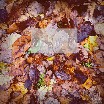Tim Hester - Autumn Leaves Poster