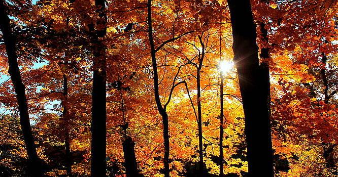 Rosanne Jordan - Autumn Lights