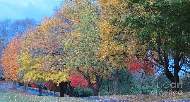 Autumn Lined Street by Anita Adams