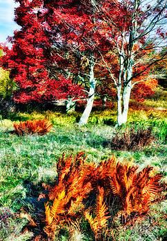 Dan Carmichael - Autumn Magic - Dolly Sods West Virginia