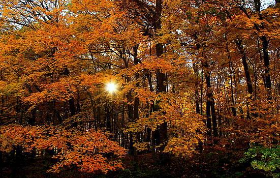 Rosanne Jordan - Autumn Morning Breakthrough