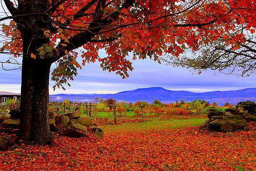Autumn Morning in Stowe by Suzanne DeGeorge